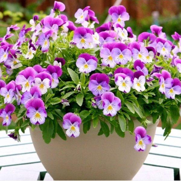 Các loại hoa dễ trồng trong chậu trang trí cho nhà thêm xinh