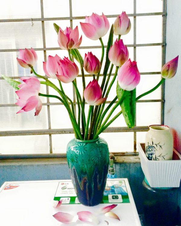 Cách cắm hoa sen tươi lâu đẹp rạng ngời