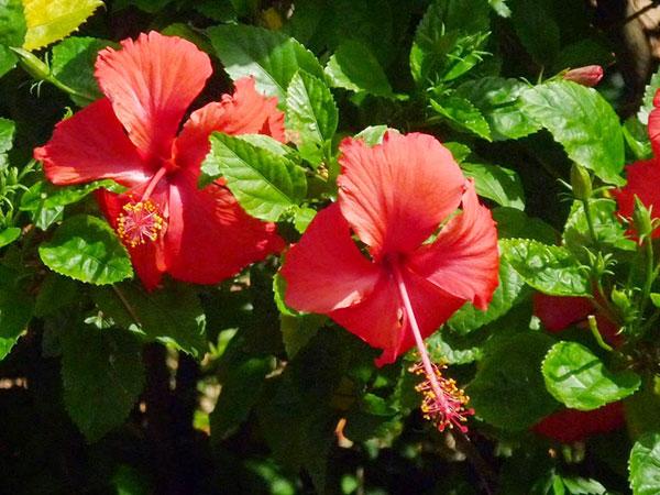 Gợi ý một số loài hoa dễ trồng nở quanh năm