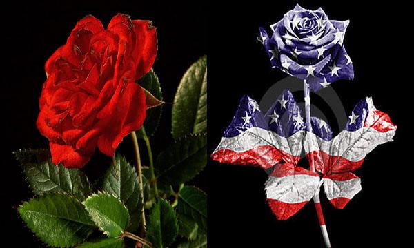 Hoa hồng là quốc hoa của nước nào?