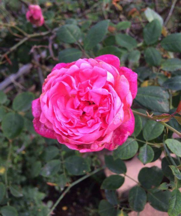 Các loại hoa nở vào mùa hè đẹp và dễ trồng