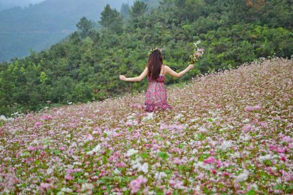 Ý nghĩa của hoa tam giác mạch – vẻ đẹp nơi núi rừng Hà Giang