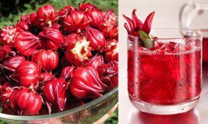 7 tác dụng thần kỳ của hoa atiso đỏ đối với sức khoẻ