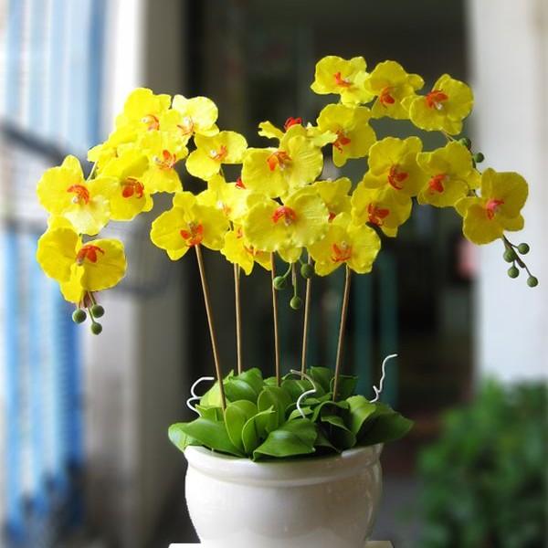 Đặc điểm và cách chăm sóc hoa lan hồ điệp nở đẹp