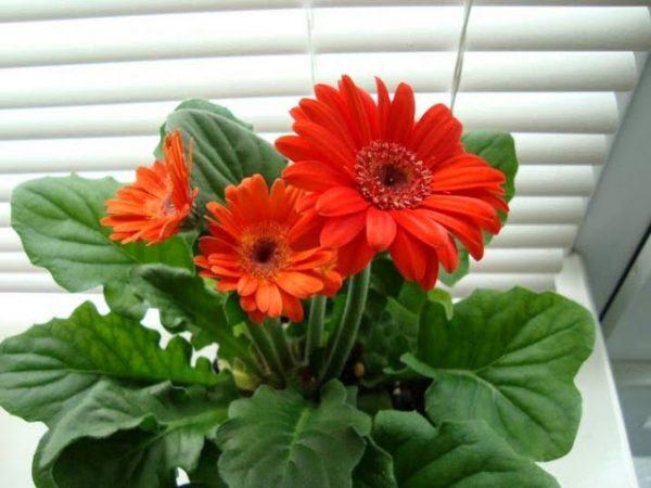Những loại hoa màu đỏ đẹp nhất mang lại may mắn và tài lộc